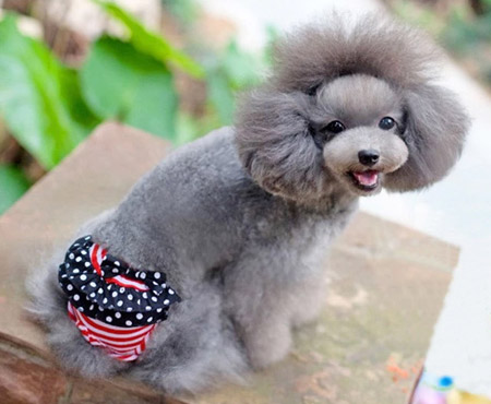 Mutandina per Cani con chiusura a strappo Bandiera USA ROSSE