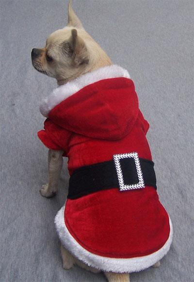 Vestiti Di Natale Per Cani.Vestito Di Babbo Natale