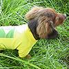 Maglietta da Calcio del Brasile per cani Bassotti